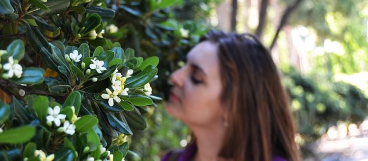 flori-de-portocal