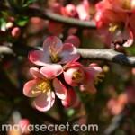 floare-close-up